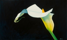 Calla Lilly by Heather Alvis, Bellingham, WA