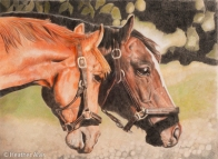 Sample Photography of Colored Pencils Horses by Susan Averre, Bellingham, WA