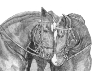 Sample Photography of Graphite Horses by Susan Averre, Bellingham, WA